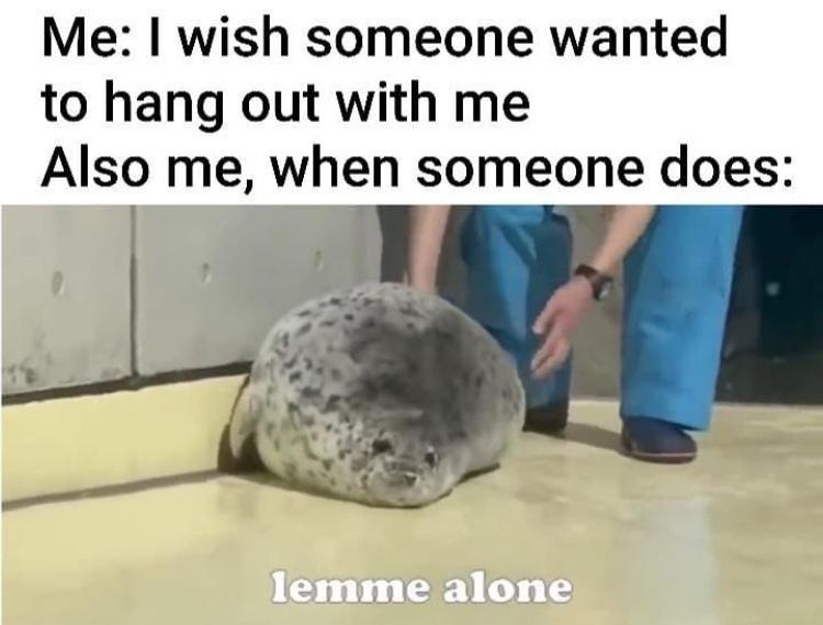 I too am a fat seal - meme