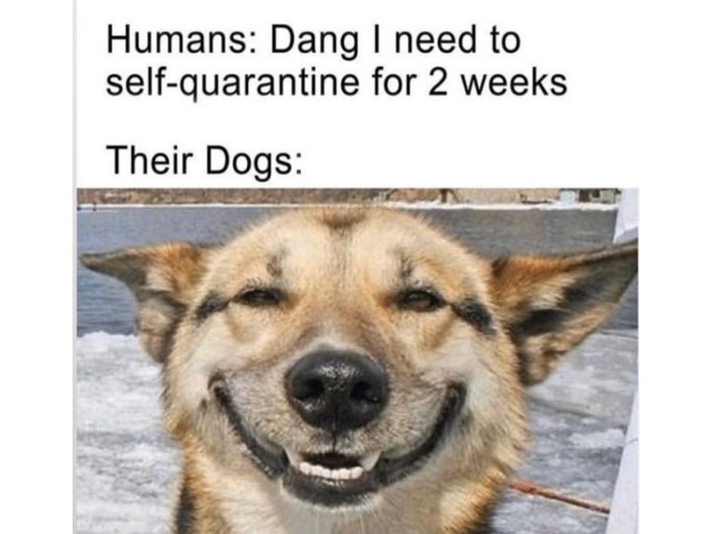 its true though - meme