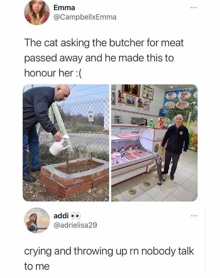 Cat for meat.... - meme