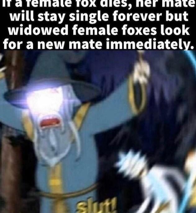 Slut - meme