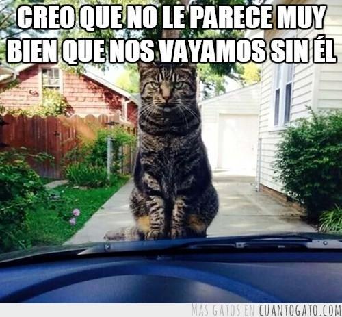 el gato se vengara - meme