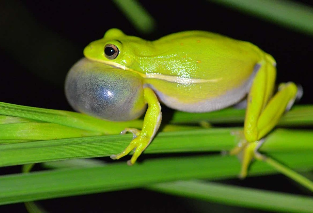 August 1st so I'm posting pics of frogs - meme