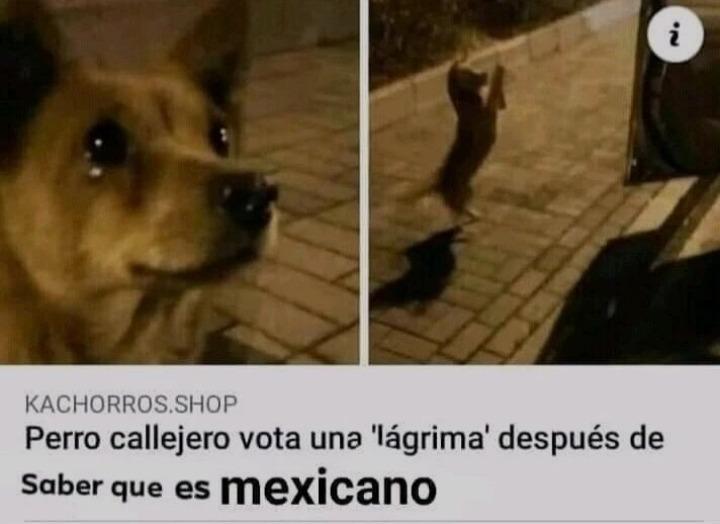 Pobre perrito :( - meme
