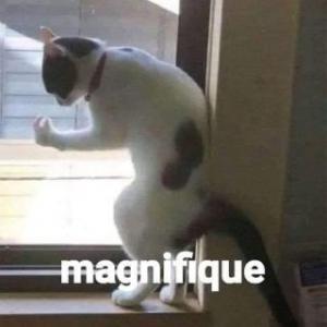 magnifique - meme