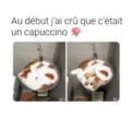 Cappucicat
