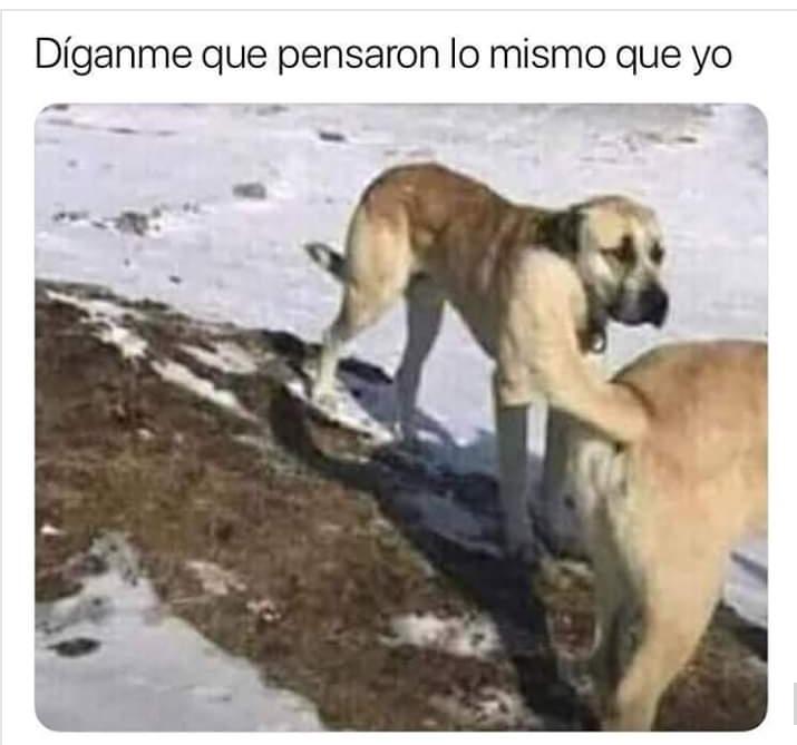 perro loco - meme