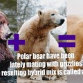 Polar Bears are not going extinct they are just learning to blend in ;)