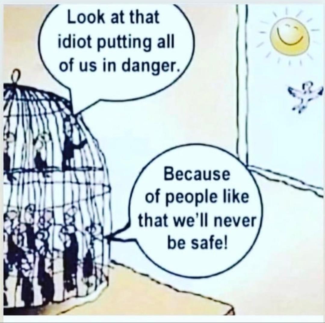 be free little birdies - meme