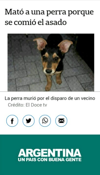 Pobre perra - meme