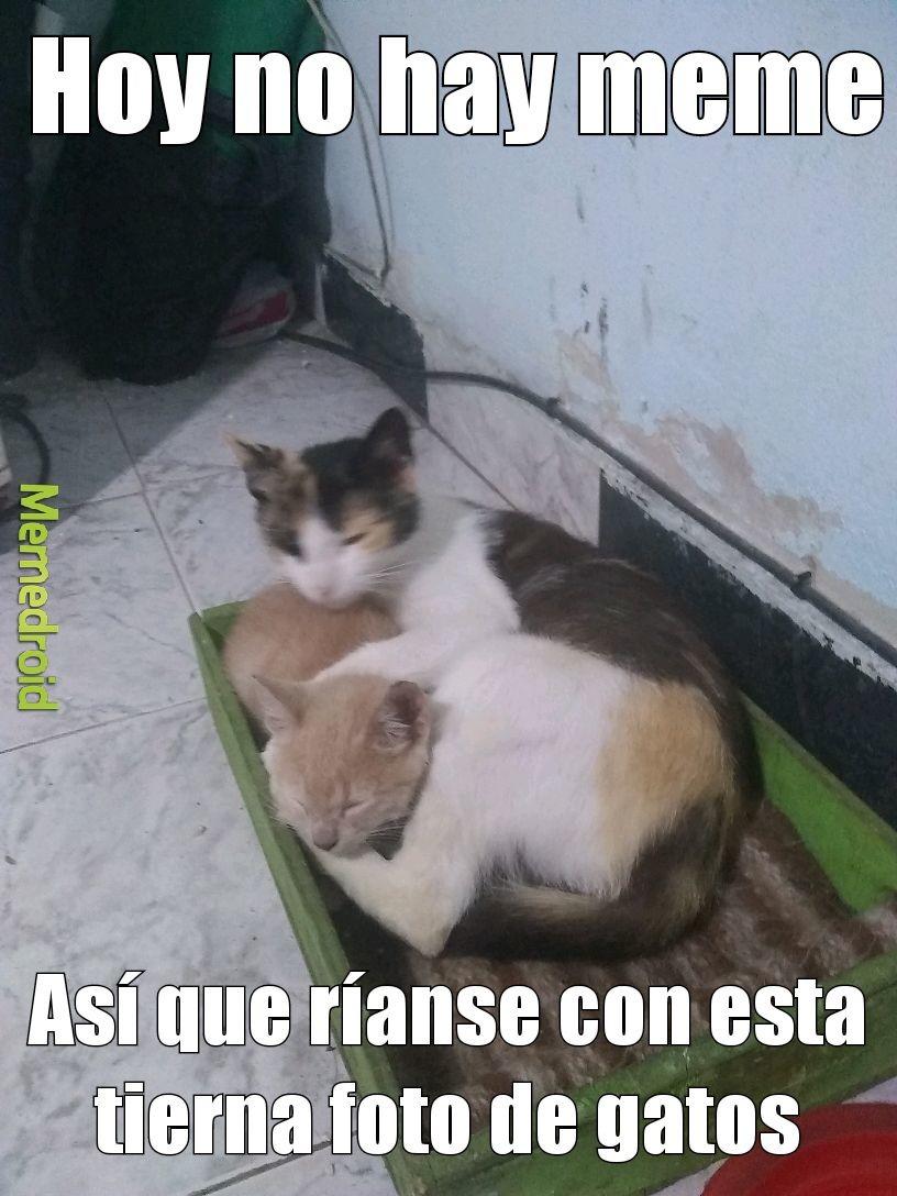 A ustedes les gustan los gatos - meme