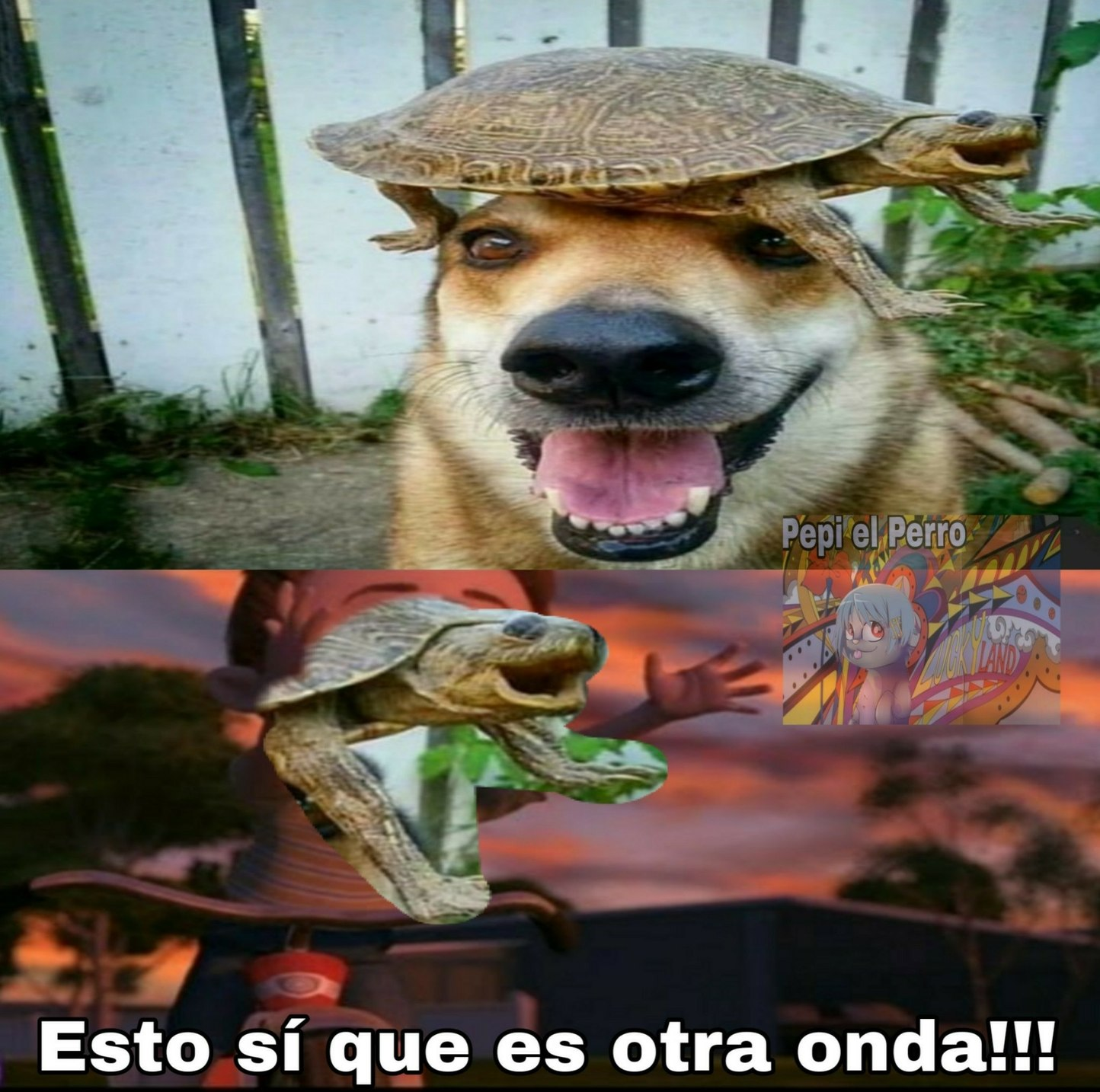 Una tortuga vivió feliz. - meme