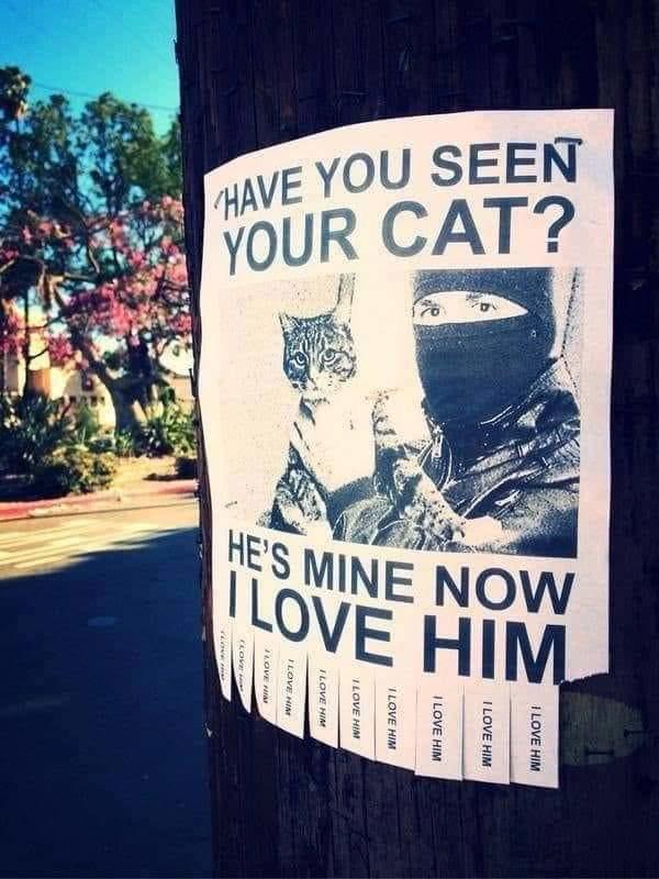 Lost cat? MINE - meme