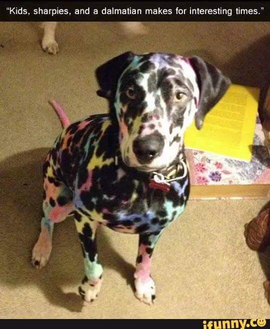 Colorful dogge - meme
