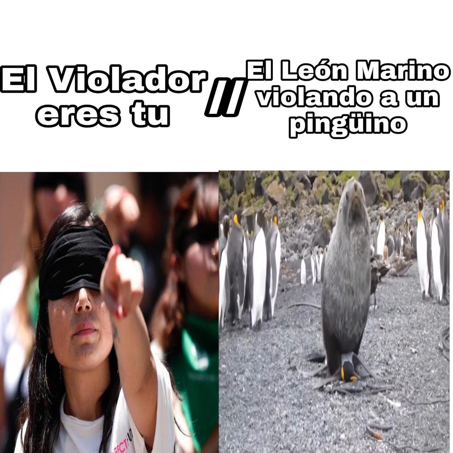 Pobre pingüino - meme