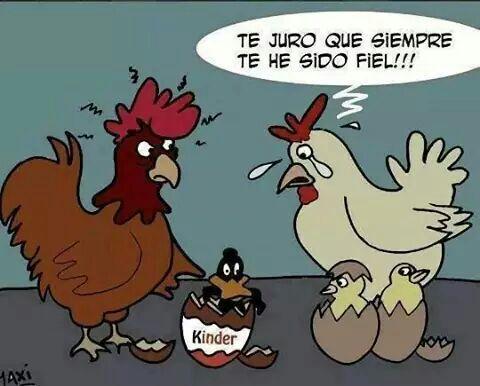 pato y gallina - meme