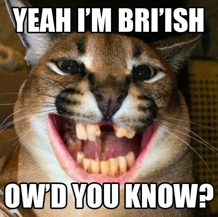 British floppa - meme