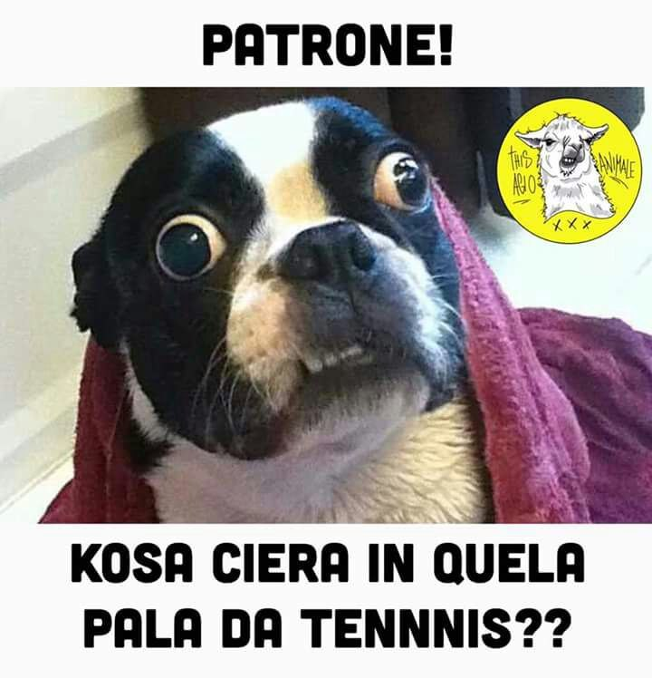 Ciao upvota - meme