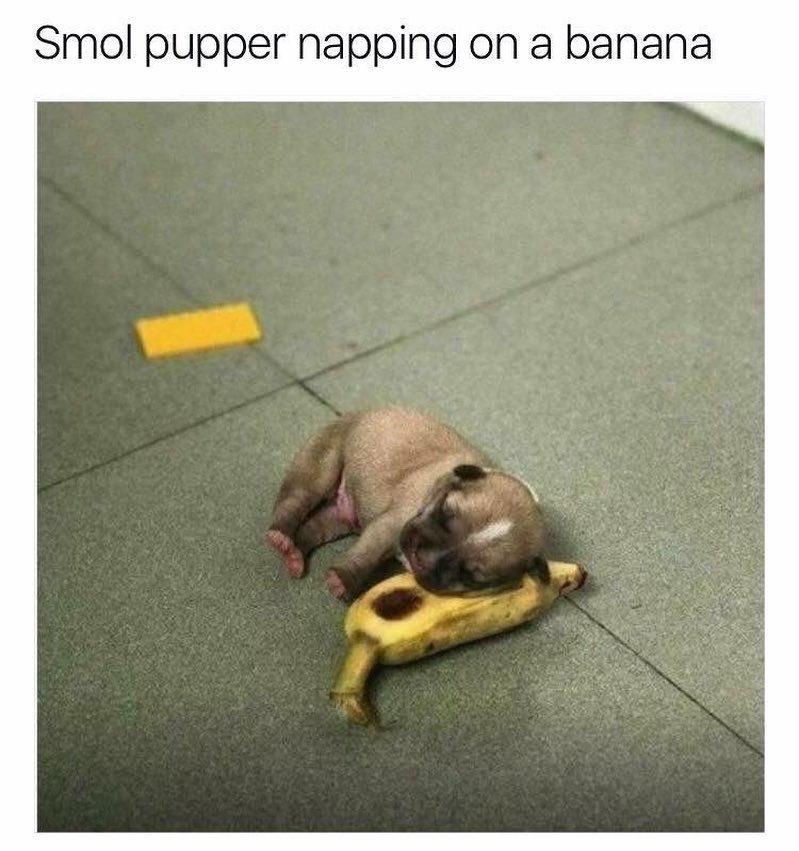 Smol pupper - meme