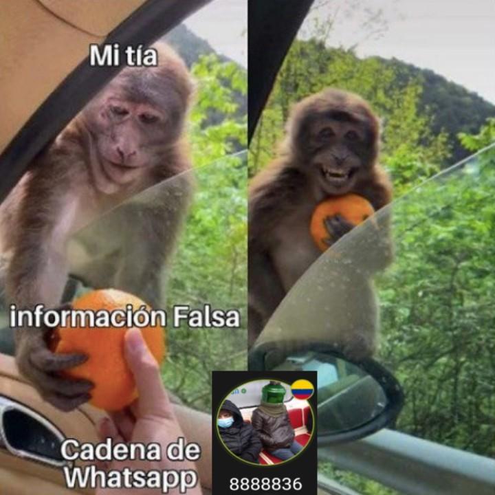 Anacardo - meme