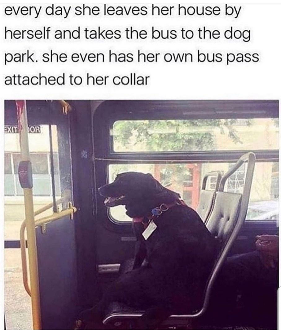 Clever Doggo - meme