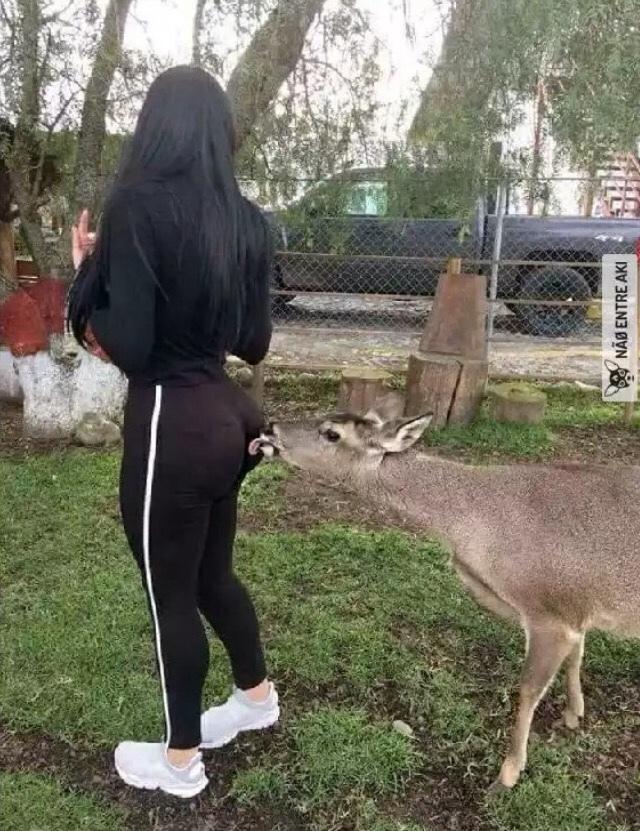 Hay cosas que ni hasta un ciervo resiste v; - meme