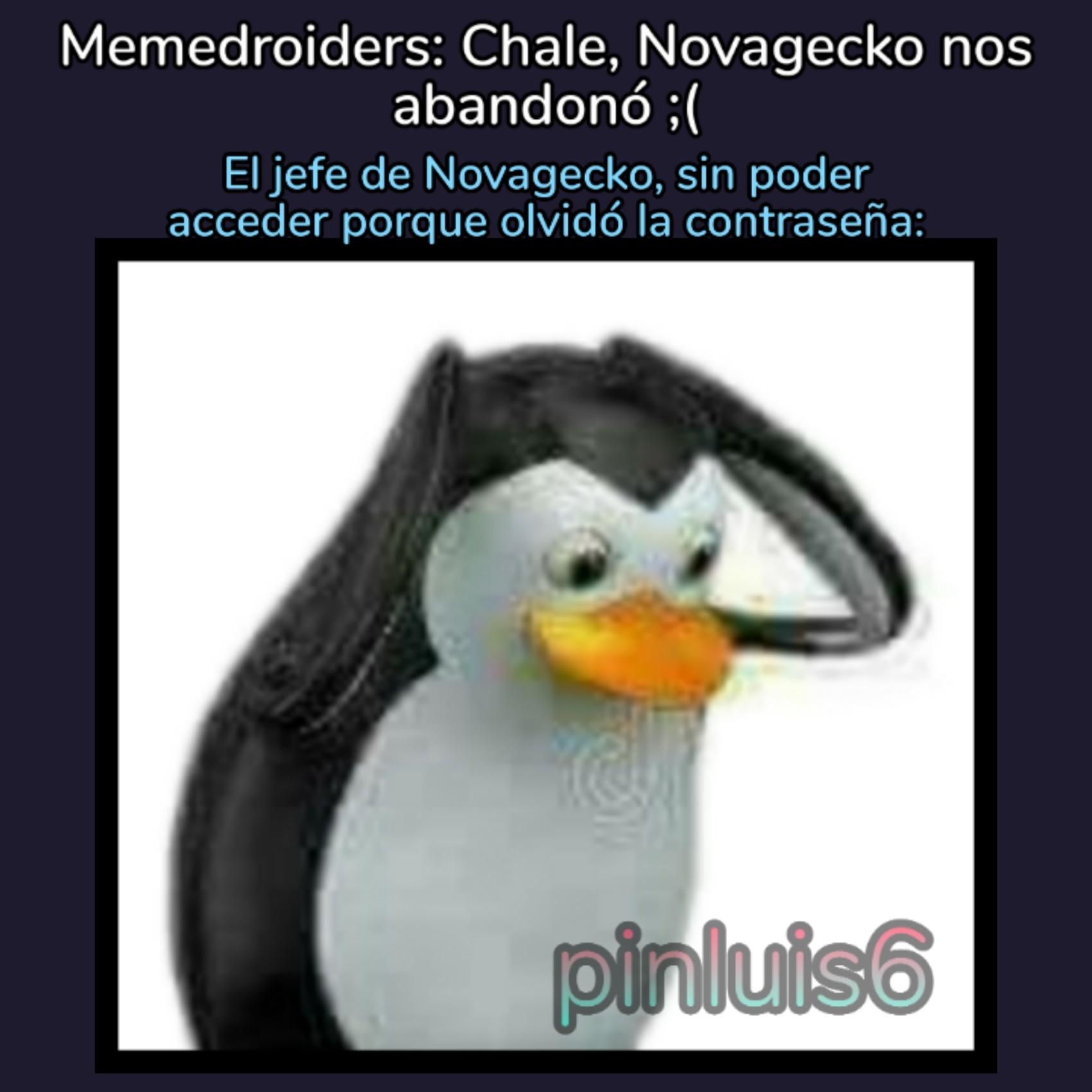 Era Novagecko01 o 01Novagecko? - meme