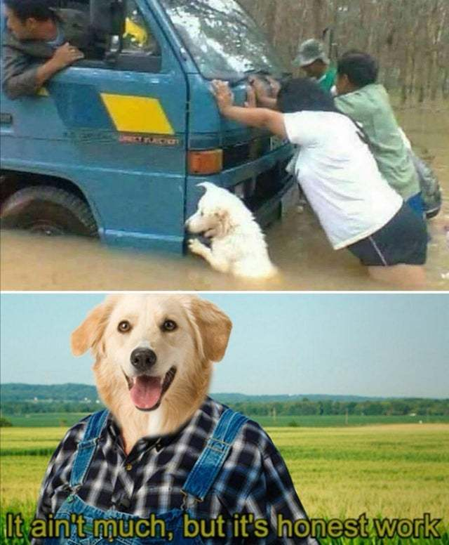Nice dog helps - meme