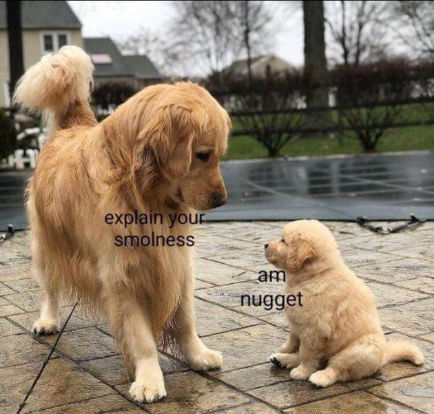 Nugget - meme