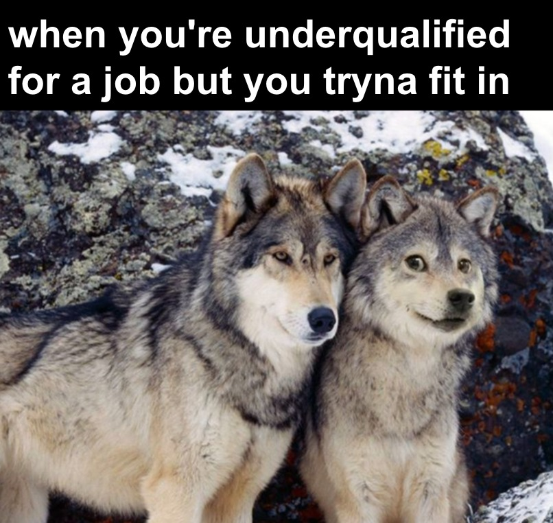 doge vs wolf - meme