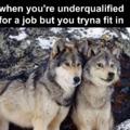 doge vs wolf