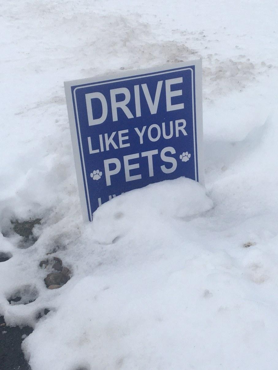 """""""Drive like your pets live here"""" - meme"""