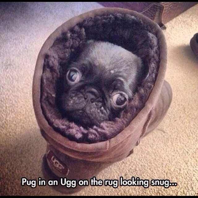 Awsome pug - meme