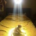 Cuando tu gato te decide dar la recompensa por la misión secundaria