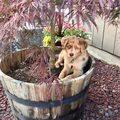 Enjoy a pic of my cute puppy, Izzy.