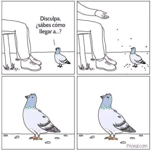 Paloma - meme