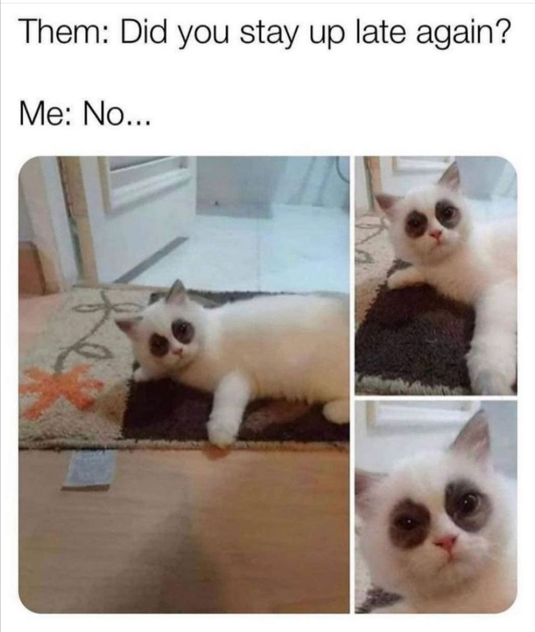 Sleep - meme
