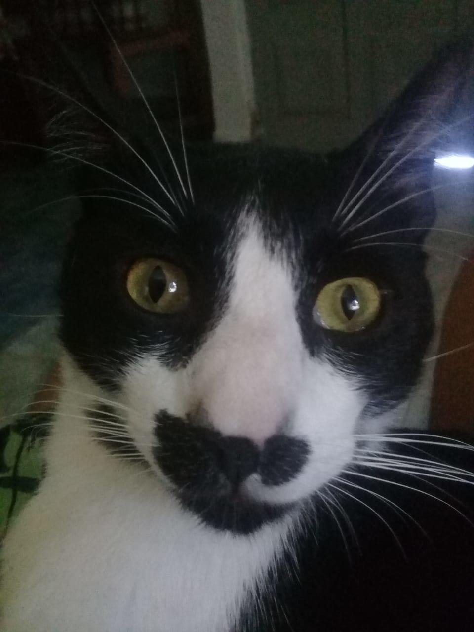 no hay meme solo esta foto de mi gato joder que hermoso