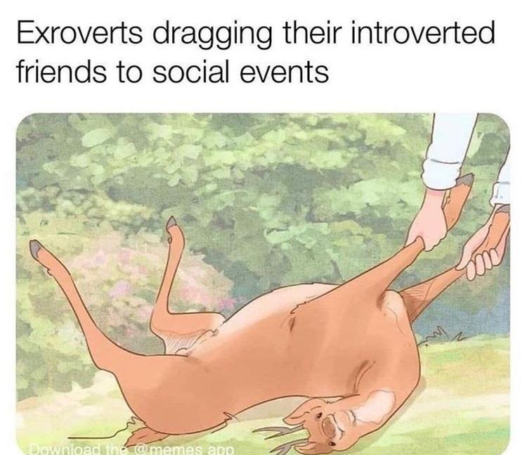 yes I am deer - meme