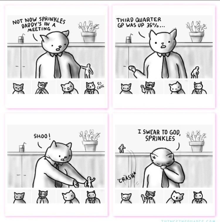 tiny cat - meme
