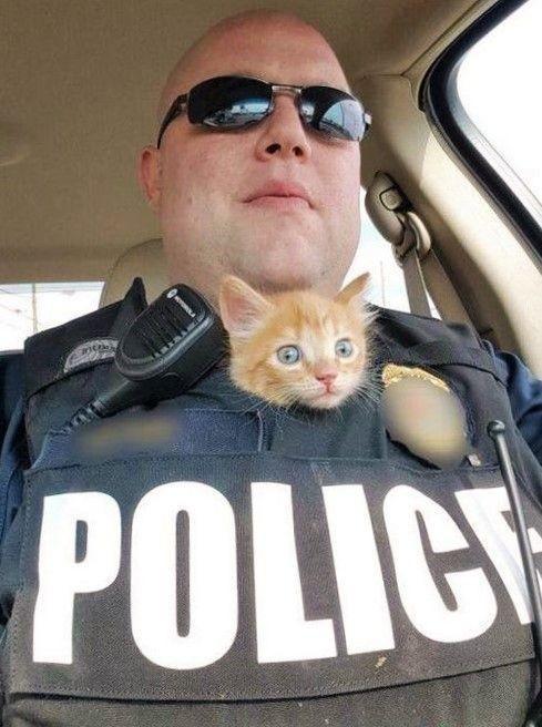 Gatinho policial - meme