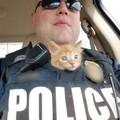 Gatinho policial