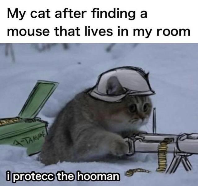Protecc the hooman - meme