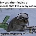 Protecc the hooman