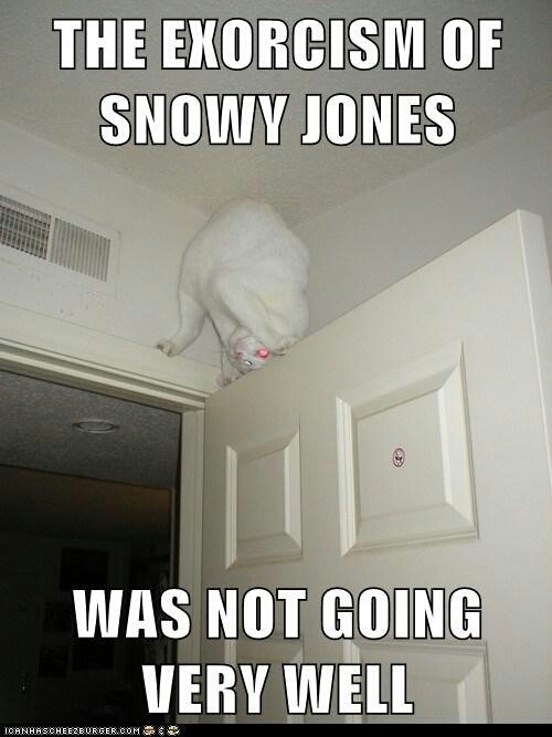 devil cat is scary - meme