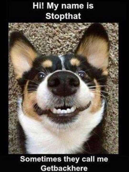 Doggie! :D - meme