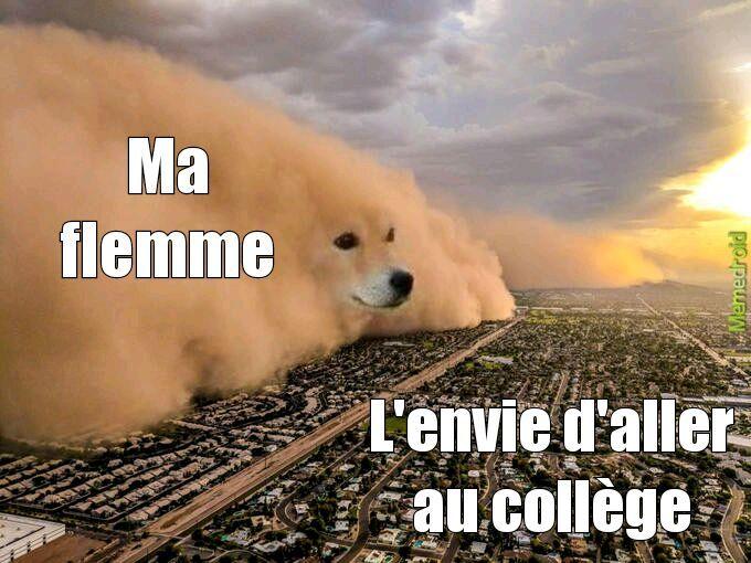 Storm dog - meme
