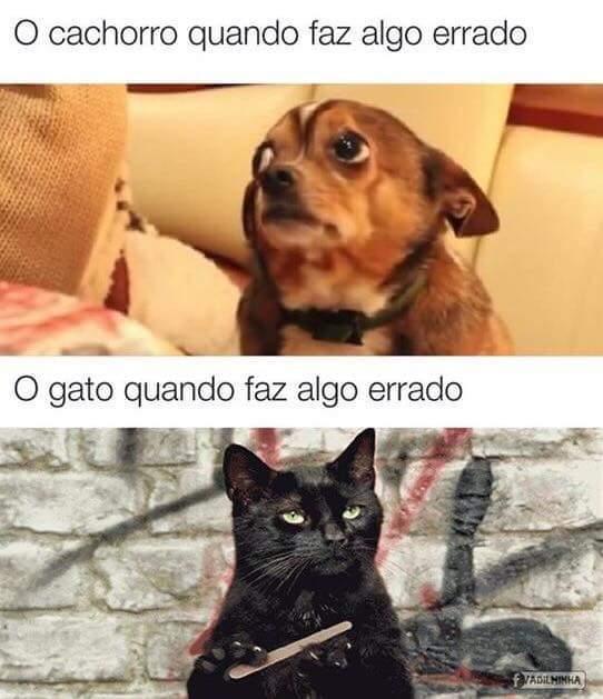 Por isso prefiro os cães - meme