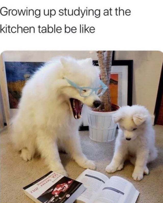 Growing up studying at the kitchen table be like - meme