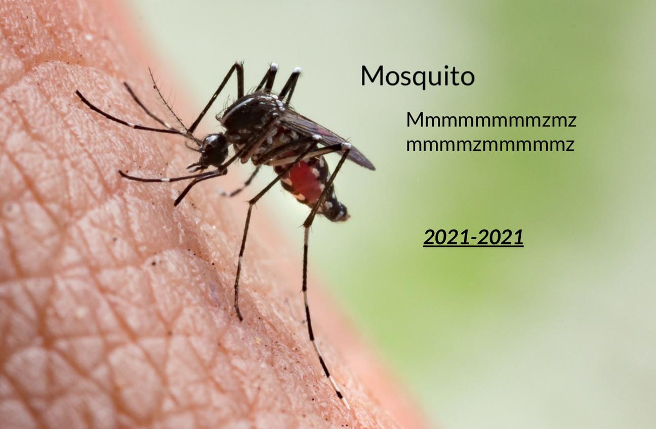 Mate un mosquito y se me ocurrió esto - meme