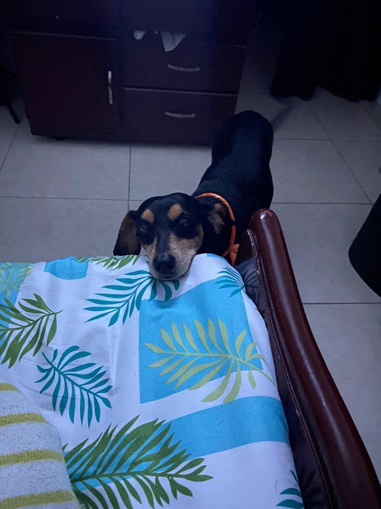 DOG REVEAL 2 MAS REVEAL QUE ANTES - meme
